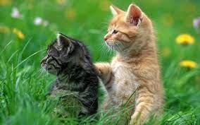 Anak Kucing Cute - Best Wallpaper Of ...