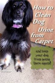 Small Picture What to Spray on Carpet to Keep Dogs From Peeing Dog pee Urine