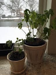 Indoor Kitchen Herb Garden Indoor Herbs Thrive On Winter Sills The Columbian
