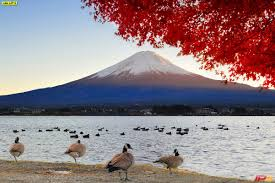 ภาพภูเขาไฟฟูจิ ภาพทะเลสาบคาวากุจิ ภาพการท่องเที่ยวญี่ปุ่น