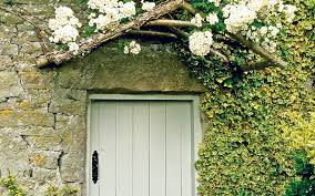 Everything You Need To Know About Climbing Plants  Home  The Wall Climbing Plants Crossword