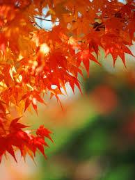 Fall Landscaping Garden Design Garden Design With Fall Landscaping Ideas Your