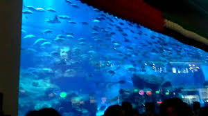 The Worlds Largest Aquarium In My Views From Dubai Mall YouTube - Bill gates interior house
