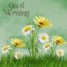 beautiful flower good morning wallpaper hd