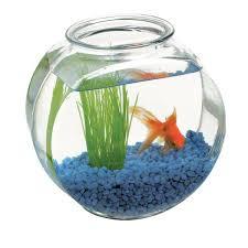 Decorative Fish Bowls Fish Bowl Decor In A List Interviews Decoration Items snouzorsph 36