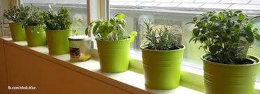 Small Picture Windowsill Herbs Designs Windows Curtains