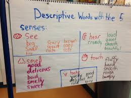 describing words using the senses the kindergarten all stars  1737 1734