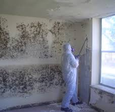 mold removal pittsburgh. Delighful Mold Black Mold Removal Throughout Mold Removal Pittsburgh L