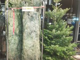 Home Bargains Christmas Lights Home Bargains Is Selling A Real 7ft Christmas Tree For 10