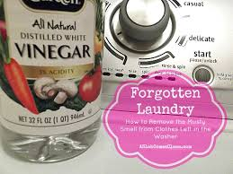 forgotten laundry how to remove the stink from clothes left in the washer a slob es clean