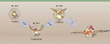 Pidgey Evolution Level Pidgey Evolution Chain Fletchling