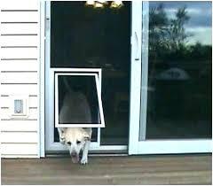 extra large pet door screen door with door storm door with pet door screen door insert extra large pet door