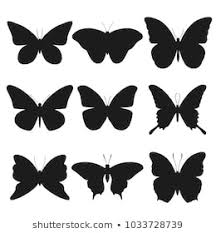 Butterfly Shape Images Stock Photos Vectors Shutterstock