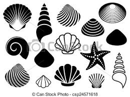 starfish clip art black and white. Delighful White Sea Shells And Starfish  Csp24571618 In Starfish Clip Art Black And White C