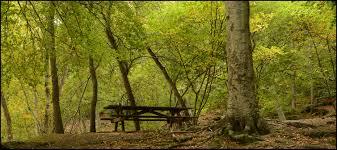 Resultado de imagen de paisaje de serenidad