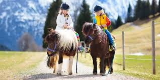 Considerations For Riding Miniature Horses Helpful Horse Hints