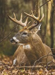Hunt Deer Despite Cwd But Be Smart News The Tri County