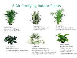 great office plants best indoor plants best office plants plants for office low light plants indoor