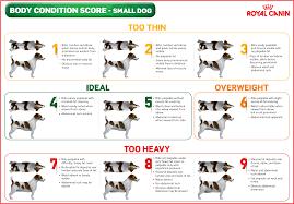Overweight Dog Chart Goldenacresdogs Com