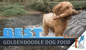 9 Best Goldendoodle Dog Foods Plus Top Brands For Puppies