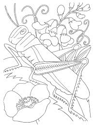 Small Picture Printable Coloring Pages Insects