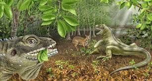La forêt tropicale ... Mori no Kami guêtte..... Images?q=tbn:ANd9GcTvo788VpkZdTn0XbP1XpBrVkIBr63958OpMDMvAt1RPkIo8uIF0g