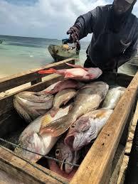 Asian canadian fish judy innis