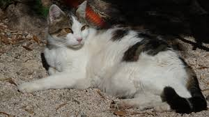 chat et rencontres en espagnol