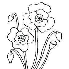 Remembrance Day Coloring Pages Poppy Coloring Pages Remembrance Day