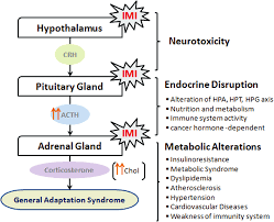 Imidacloprid Exposure Affects The Hypothalamic Pituitary Adrenal