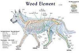 Canine Trigger Point Chart Canine 5 Element Meridian Chart Set Of 4 Dog Lake Forest