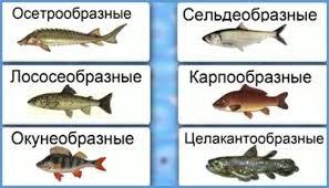 Биология класс Классы рыб Важнейшие отряды костных рыб