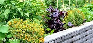 Plan A Garden Online How To Plan A Garden Orderostore Club