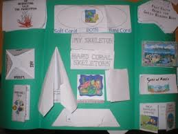 coral reef and five senses lapbooks just us coralreef