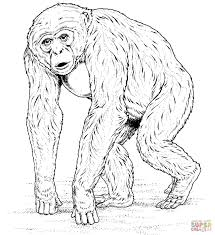 Chimpanzee Coloring Pages Jerusalem House