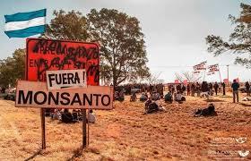 Resultado de imagen para Monsanto no podrá patentar semillas en Argentina