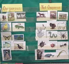 Zoology 1 Lessons 5 6 Oviparous Animals Egg