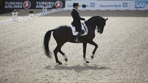 Elegance In Equine Form - Sportspro Media