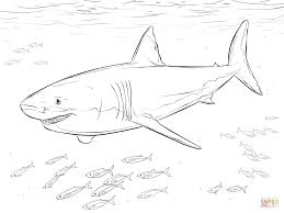 Coloriage Grand Requin Blanc Et Poissons Pilotes Coloriages
