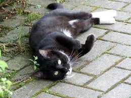 Bildergebnis für schwarze katzen