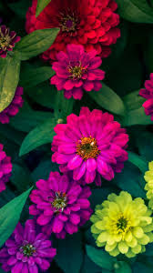 Colorful flowers #wallpaper #iphone ...