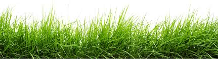 grass.  Grass Line Of Grass PNG Image  PurePNG  Free Transparent CC0 Library And
