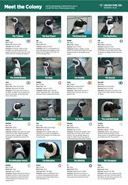 Penguins Depth Chart Id Our Penguins With This Cheat Sheet Lincoln Park Zoo