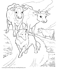 Small Picture Cow Coloring Pages Printable Dairy herd coloring page