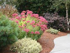 Small Picture The 10 Best Plants for Your Pacific Northwest Garden Garden
