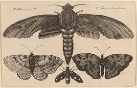 Moth Identification Chart How Can You Tell The Difference Between A Butterfly And A