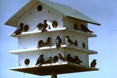 martin bird house plans. How To Make A Purple Martin Birdhouse Thumbnail Bird House Plans