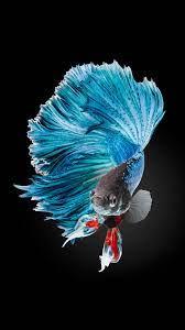 Fish Clean Lock Screen Wallpaper - Free ...