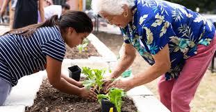 start your own garden at home austin
