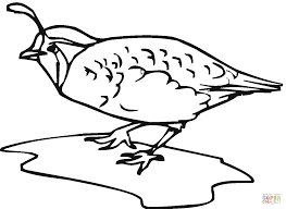 Small Picture Quail bird coloring page Free Printable Coloring Pages